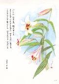 花と祈りポストカード ささゆり (5枚組)