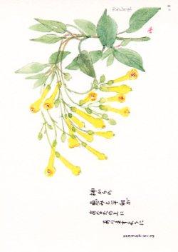 画像1: 花と祈りポストカード カラシの木 (5枚組)